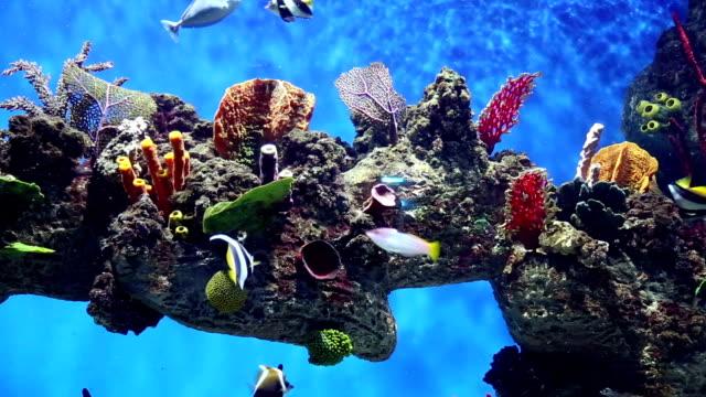 fish майка с красочные рыбы, жизни и кораллами - морская рыба стоковые видео и кадры b-roll