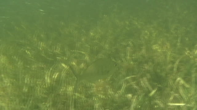 stockvideo's en b-roll-footage met fish tracking underwater 2 - hd 60i - minder dan 10 seconden