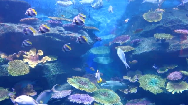 A fish under water video