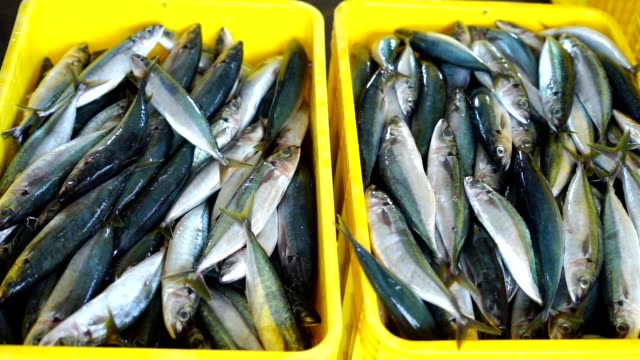 Fish Vendor Packaging Sardines with ice and Box Fish Vendor Packaging Sardines with ice and Box - Container, indian ocean stock videos & royalty-free footage
