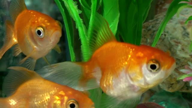 Fish video