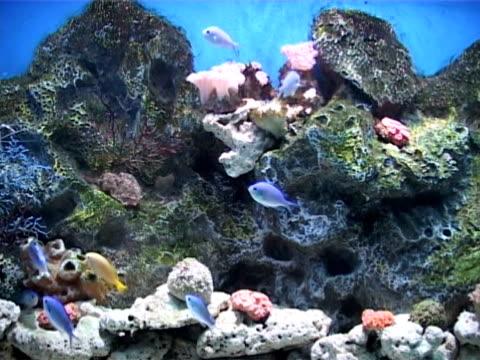 fish  - aquarium oder zoo stock-videos und b-roll-filmmaterial