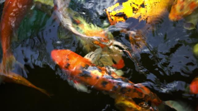 fish - spoiler filmów i materiałów b-roll