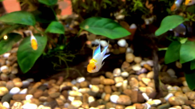 fish fish freshwater stock videos & royalty-free footage