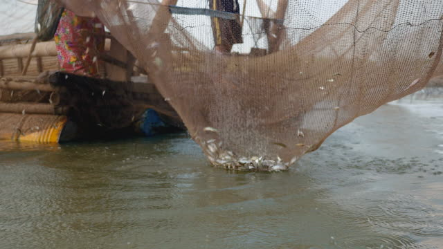 Fisher using a hand net to take fishes caught out of a Chinese fishing net  ( close up )