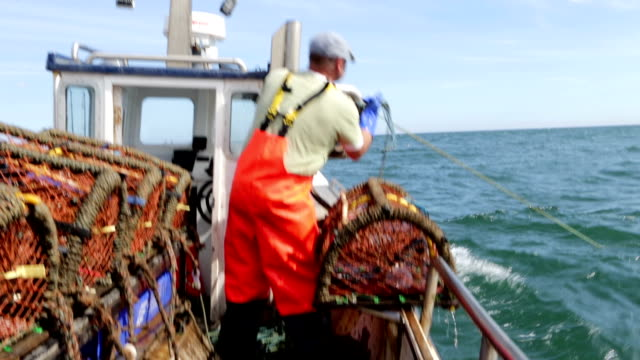 Fisherman catching Lobsters video