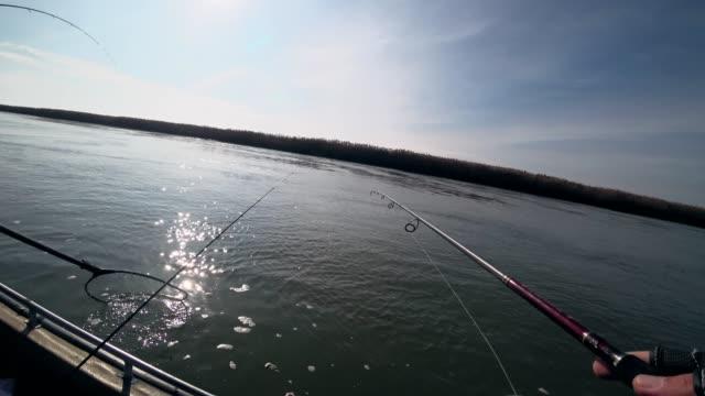 vídeos de stock e filmes b-roll de fisherman fishing the predatory fish on a river in sunny weather, first person view - fishman