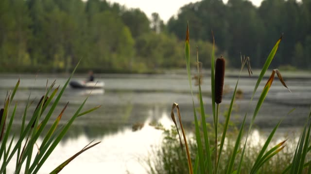 Fisherman is fishing with fishing rod from inflatable boat in river backwater. Weekend hobby. Calm summer landscape. Summer sultry noon on shore of forest lake. 4K video