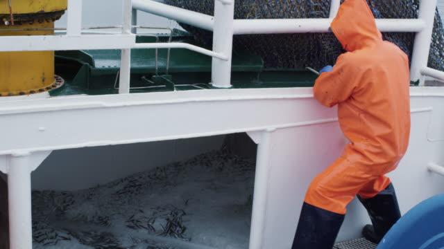 vídeos de stock, filmes e b-roll de pescador abre arrasto com caugth peixe a bordo do navio de pesca comercial - países bálticos