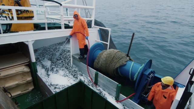 fischer spült spitzentrio fisch an bord des kommerziellen fischfangs schiff - fang stock-videos und b-roll-filmmaterial