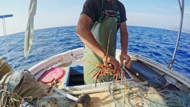 Fisherman untangling lobster from net on fishing boat