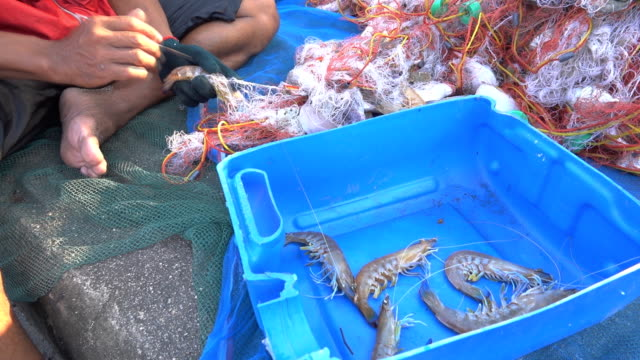 fishermen at work - crostaceo video stock e b–roll