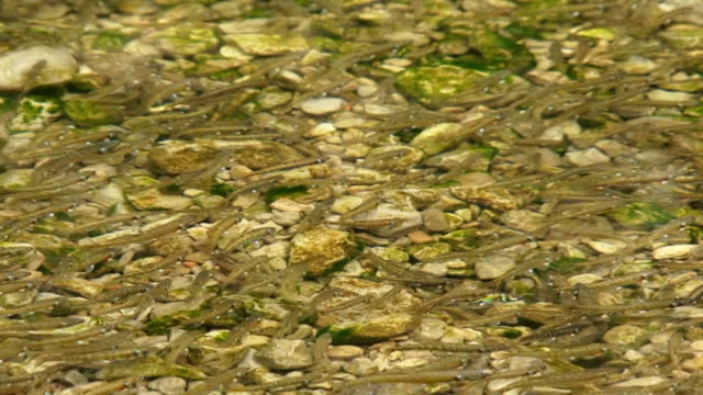 fishes in a lake - i̇htiyoloji stok videoları ve detay görüntü çekimi