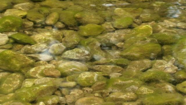 fishes in a river - i̇htiyoloji stok videoları ve detay görüntü çekimi
