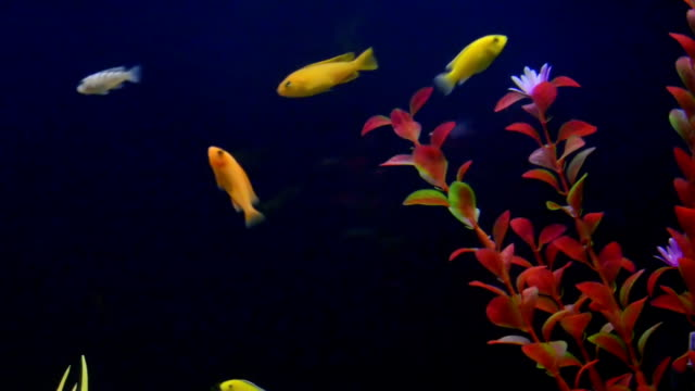 Fishes in an aquarium. video