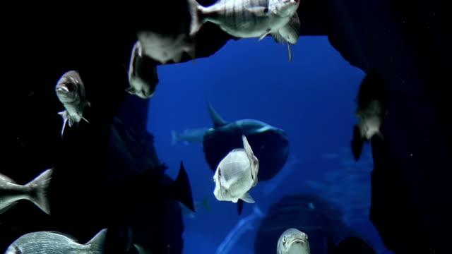 fische im rocks - sonnenbarsch stock-videos und b-roll-filmmaterial
