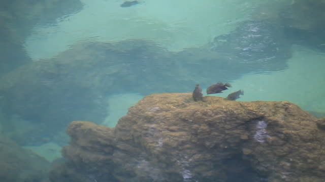 fishes in swamp forest video
