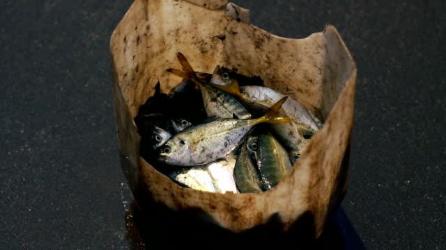 魚  - 漁師 外人点の映像素材/bロール