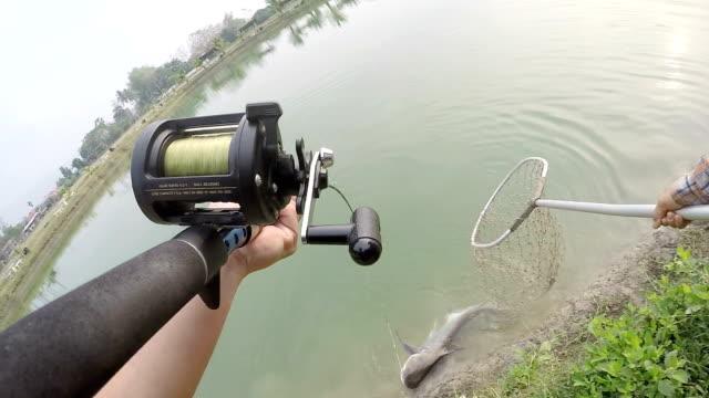 fiske en giant chao phraya havskatt i sjön. - djurarm bildbanksvideor och videomaterial från bakom kulisserna