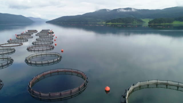 fishing. aerial view over a large fish farm with lots of fish enclosures. - морская рыба стоковые видео и кадры b-roll