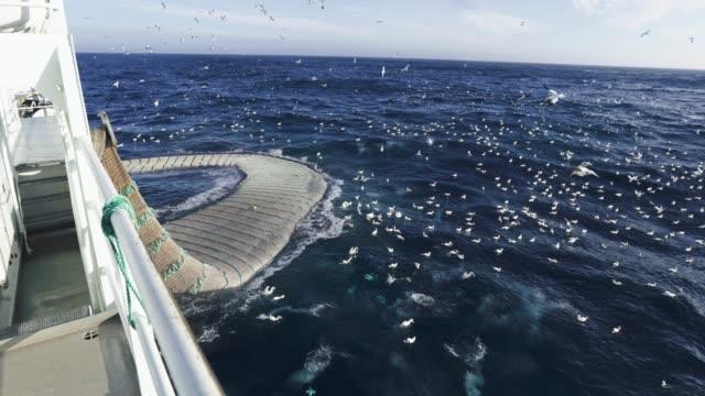 båten trålare fiskefartyg: enorm fångst av fisk - fiskebåt bildbanksvideor och videomaterial från bakom kulisserna