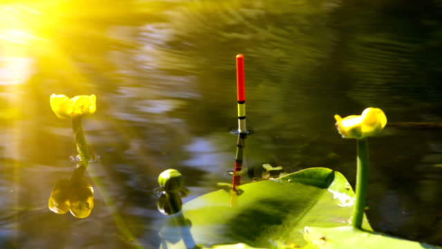 Fishing bobber in the lake video