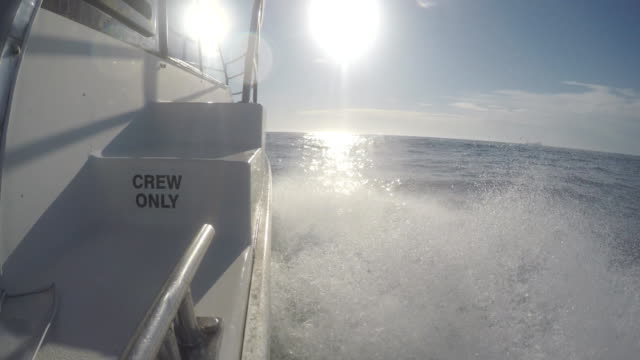 fishing charter boat bow wave