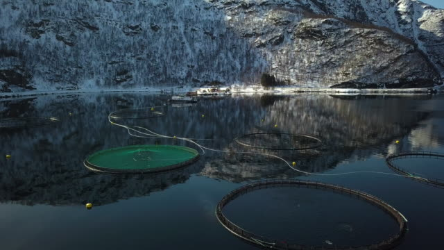 vídeos de stock e filmes b-roll de fishing farm in northern norway in a fjord in hilleshamn, tromso province - países nórdicos