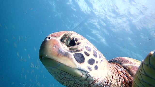 ウミガメの目に刺さった釣りフック - 海洋生物点の映像素材/bロール