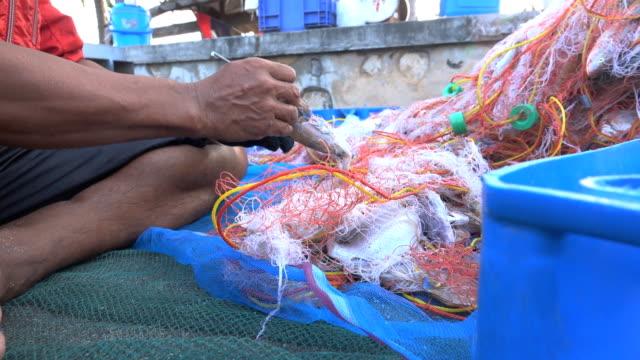 Fishing Industry, Sorting the fish for fishermen.