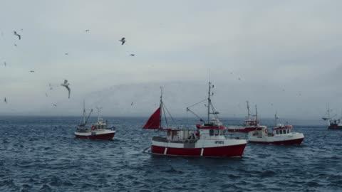 vidéos et rushes de pêche skrei morue dans la mer arctique - transport nautique
