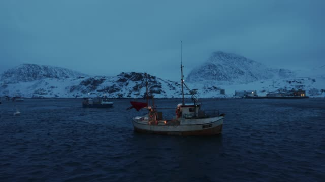 vídeos de stock e filmes b-roll de fishing skrei cod in the arctic sea - cod