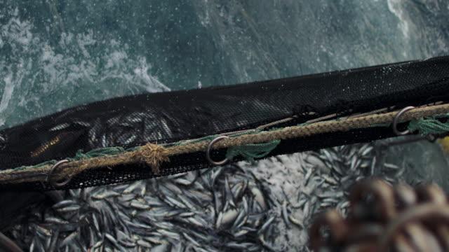 Fishingboat vessel fishing: huge catch of fish