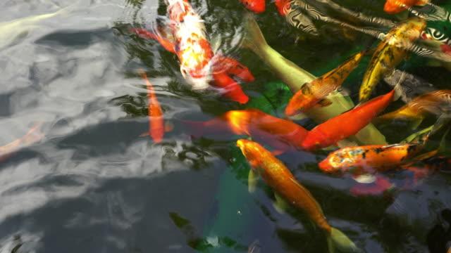 fishs - spoiler filmów i materiałów b-roll