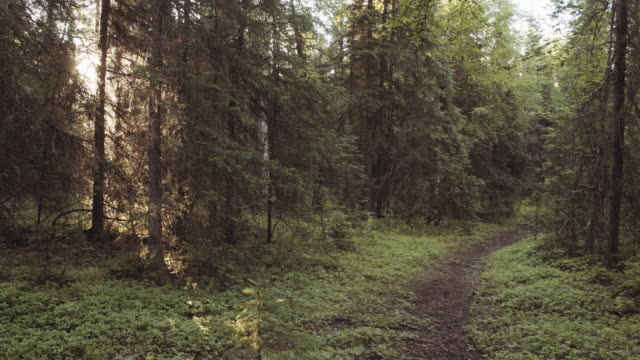 UHD 4K: Fit senior couple running together on a trail through the woods video