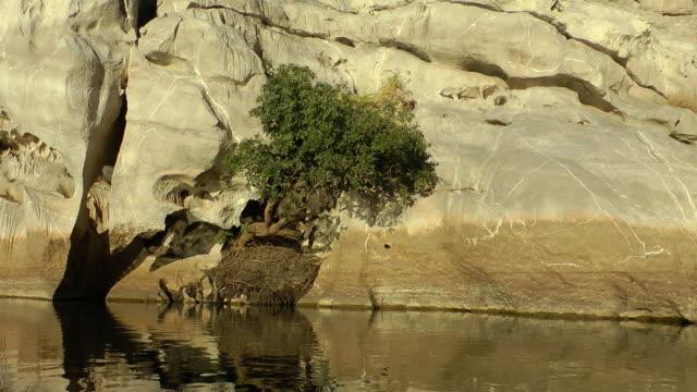 Fitzroy river video