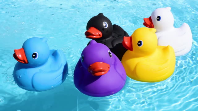 five colourful rubber ducks floating relaxed and casually on the sparkling and crystal clear water of a pool in summer light - cinque oggetti video stock e b–roll
