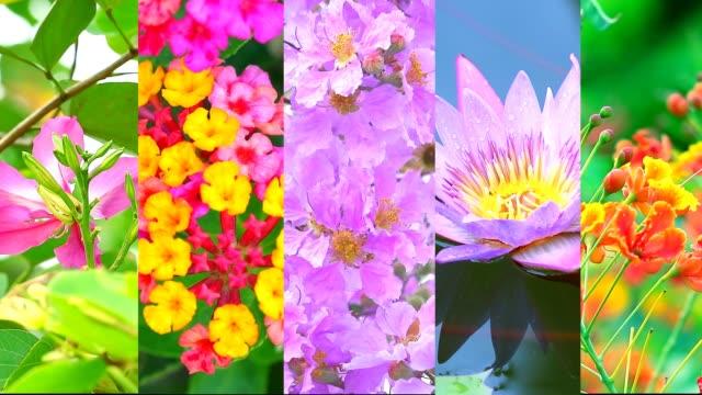 five flowers in the garden in summer season