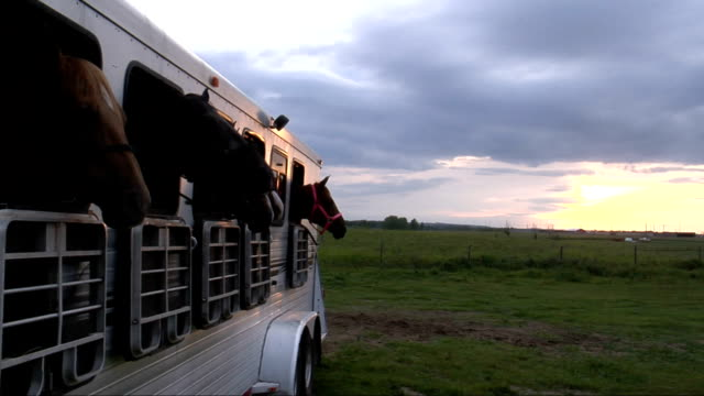 Five Horses in Trailor video
