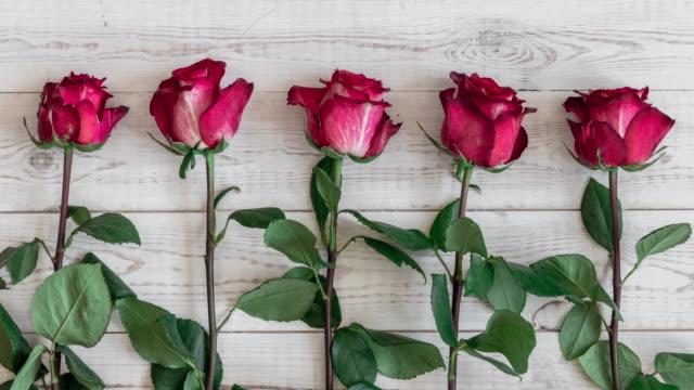 vídeos y material grabado en eventos de stock de cinco rosas rosas y rojas - stop sign