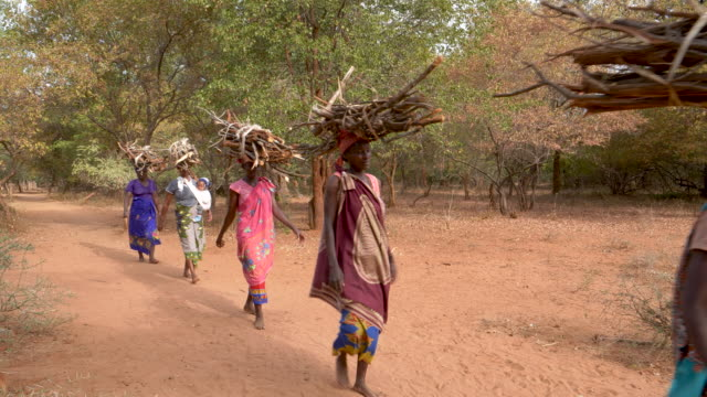 Five woman walking home balancing firewood on their heads they have collected for making fires for cooking and warmth, Zimbabwe