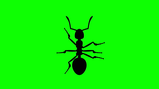 Fixed Ant on green screen, CG animated silhouette, looping video