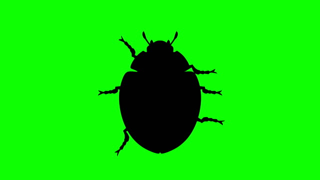 Fixed Beetle on green screen, CG animated silhouette, looping video