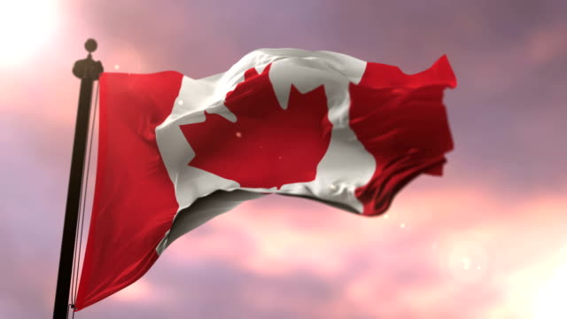 Flag of Canada waving at wind at sunset, loop Flag of Canada waving at wind at sunset, loop maple leaf videos stock videos & royalty-free footage