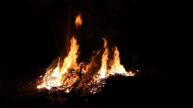 Flames burned near a tree. video