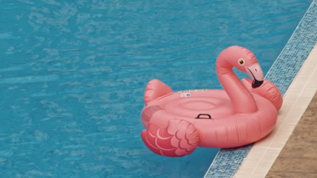Flamingo in the Swimming Pool