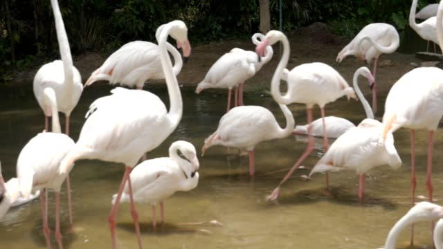 Flamingo of animals Travel with family holiday Flamingo of animals Travel with family holiday animal limb stock videos & royalty-free footage