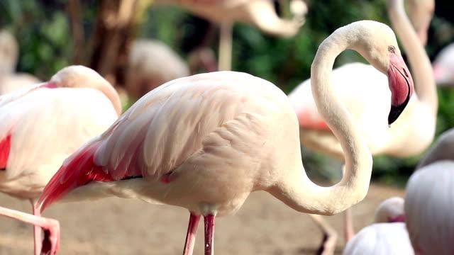 Flamingo Relaxing video
