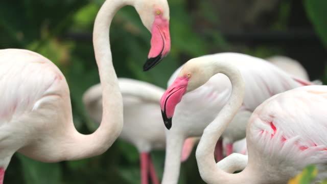 Flamingo, Slow motion