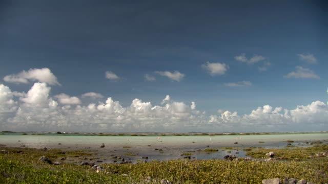 フラミンゴの農場で塩 - 水鳥点の映像素材/bロール